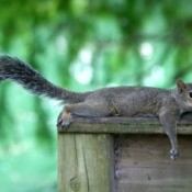 Squirrel Outside