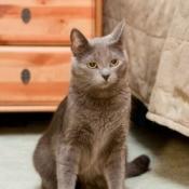 cat on carpet