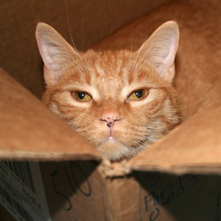 Cat in box.