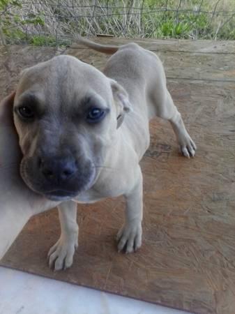 Closeup of puppy.