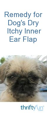 Remedy For Dog S Dry Itchy Inner Ear Flap Thriftyfun