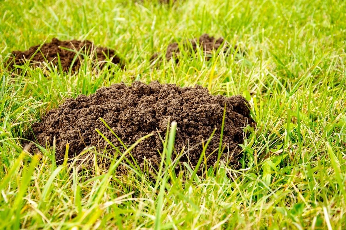 Environmentally Safe Grub Control | ThriftyFun
