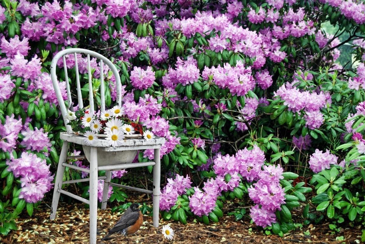 Flowering Evergreen Plants Thriftyfun