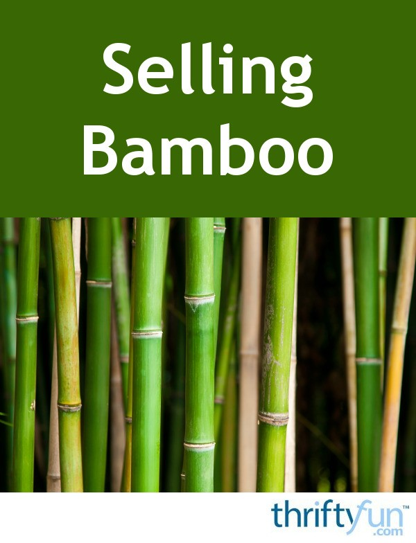 best bamboo cane pole stake all decor ideas for fences.htm selling bamboo thriftyfun  selling bamboo thriftyfun