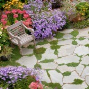 Replacing Your Lawn With Plants