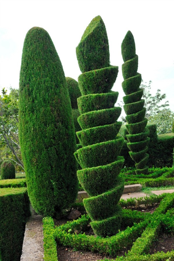 Attractive Topiary Ideas Part - 8: Topiary Landscaping