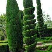 Topiary Landscaping