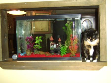 Callie on shelf next to fish tank.