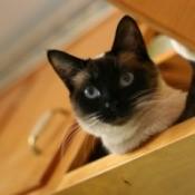 A cat in a kitchen cabinet.