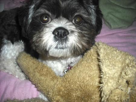 Zinna as a puppy.