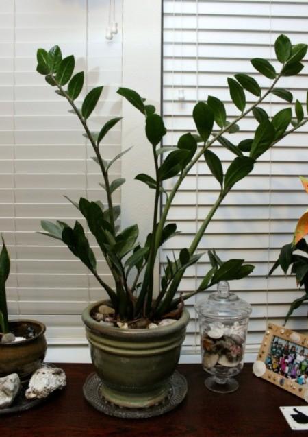 plant saucer 2