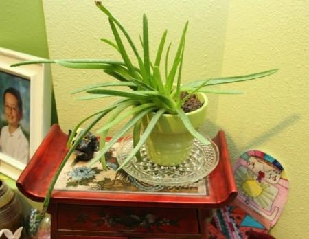 plant saucer 1