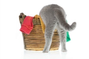 Cat getting into a laundry basket.