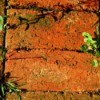 Weeds Between Bricks