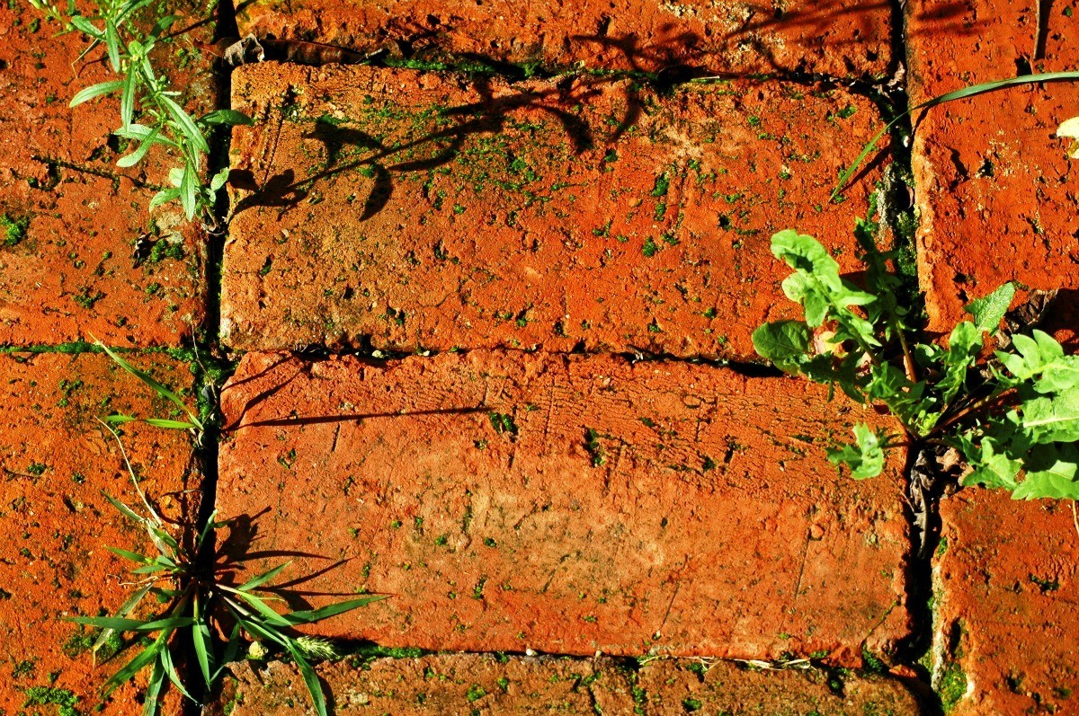 Preventing and Killing Weeds Between Bricks | ThriftyFun