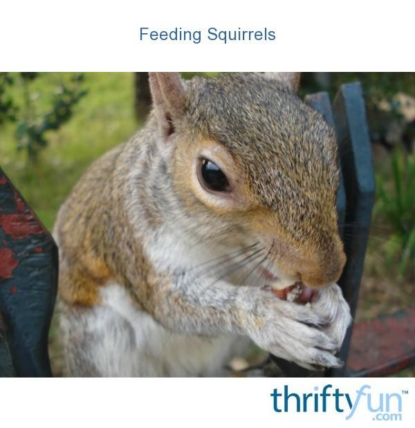 Feeding Squirrels | ThriftyFun