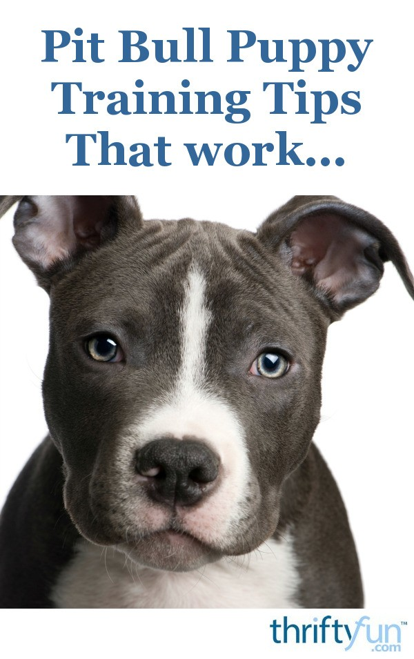 Training a Pit Bull Puppy | ThriftyFun