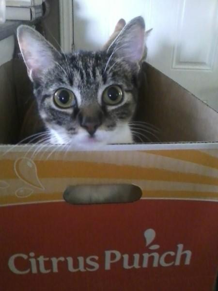 Kitty in box.