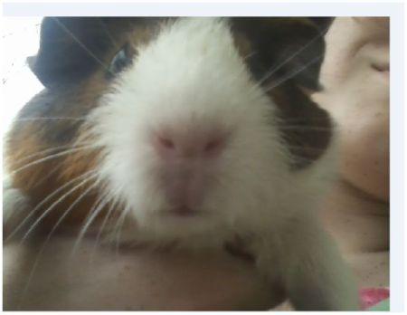 Closeup of Lulu's face.