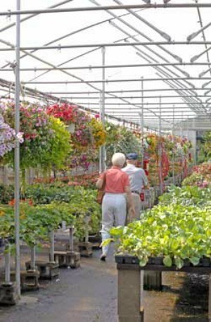Buying Bedding Plants