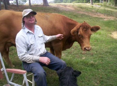 Reddish brown cow.