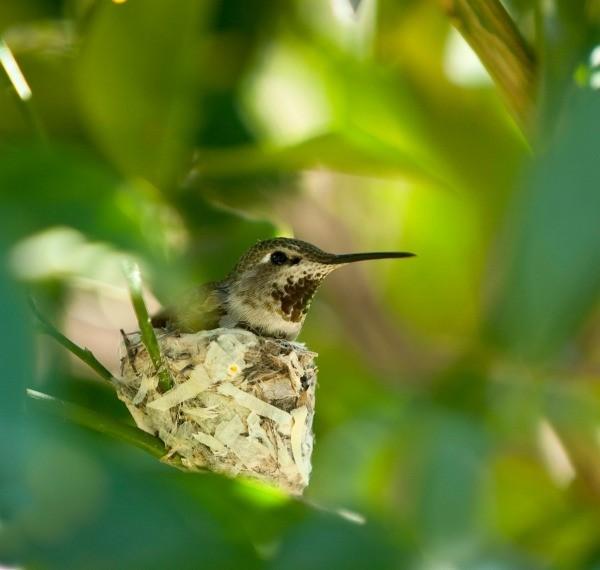 El huevo del colibrí atasca el proyecto del puente de Richmond-San Rafael - área de la bahía de NBC