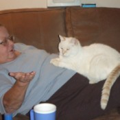 Cat lying on owner.