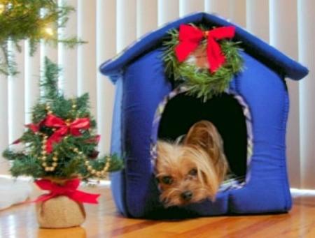 Webster (Yorkshire Terrier)