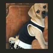 Lola (Puggle)