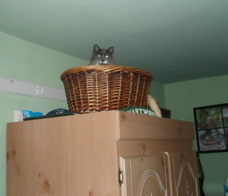Cat in a basket on top of armoire.