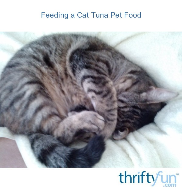 Can Cats Eat Tuna Every Day