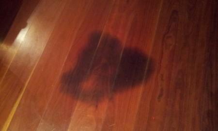 Pet urine stain on wood floor.