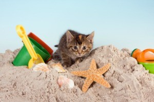 cat in a sandbox
