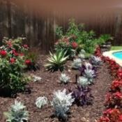 Planting around pool.