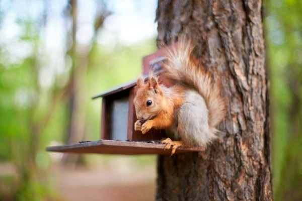 how to build a squirrel feeder