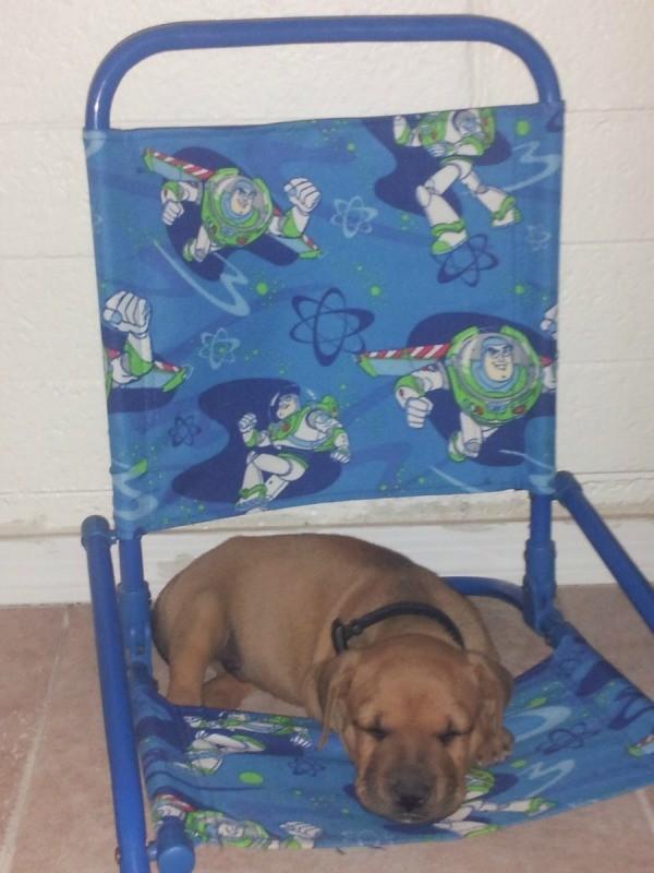 Puppy lying on folding chair.