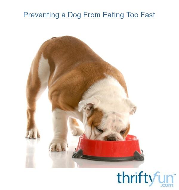 Dog Bloat Food Bowls