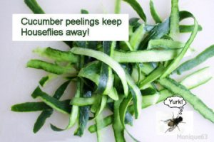 Keep Houseflies Away with Cucumber Peelings