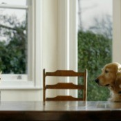A dog and cat sitting in at a table in a house looking at each other.