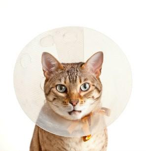 A cat wearing a plastic dish.