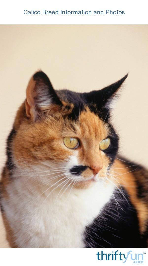 revolution flea medication for kittens