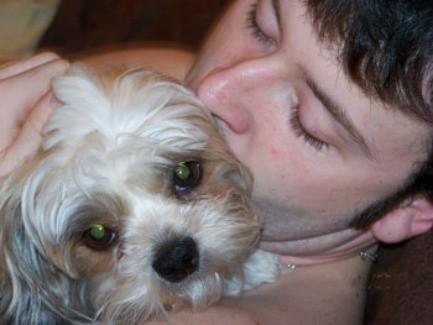 Katie-Alanis (Shih-tzu) - close up of young man kissing a dog