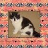 Princess PJ (Tuxedo Cat)