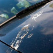 Bird Droppings on a Car