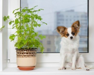 A dog next to a houseplant.