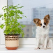 A dog next to a houseplant.