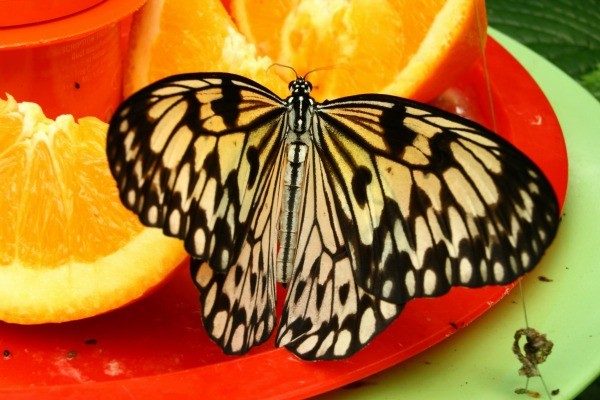 Making A Butterfly Feeder Thriftyfun