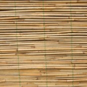 reed window blinds
