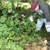 tackling blackberries 1