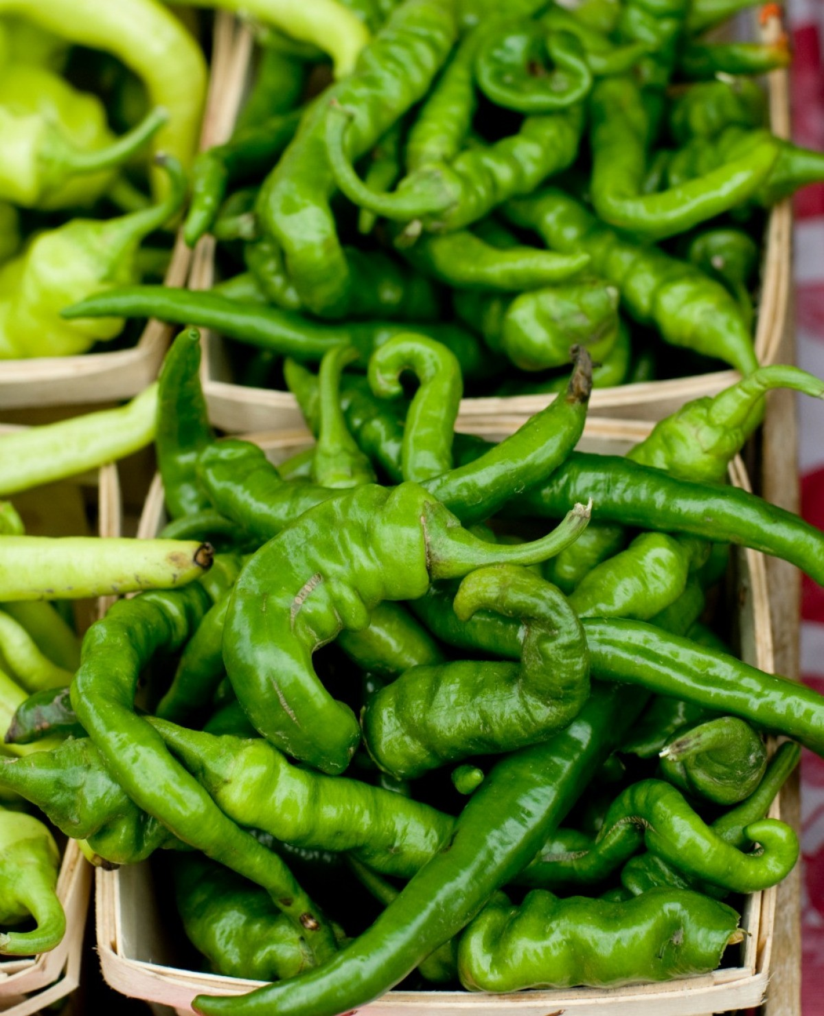 Using Anaheim Chile Peppers New Mexican Chiles Thriftyfun